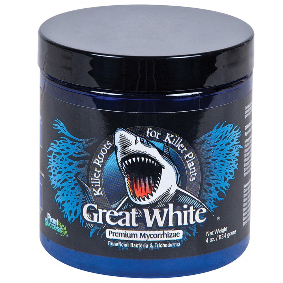 Plant Success Great White |...